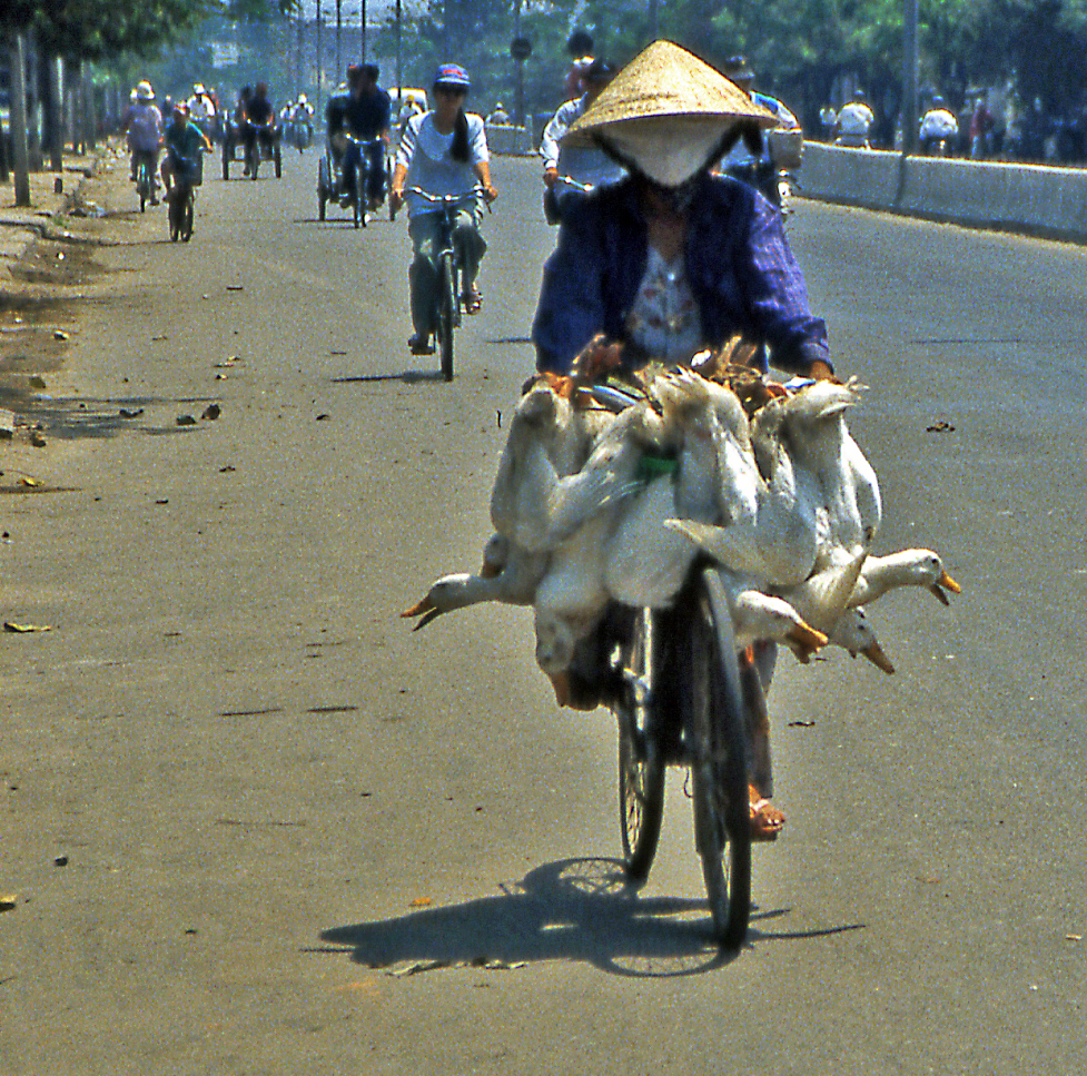 Bicycling Vietnam Bringing fresh chickens to market!