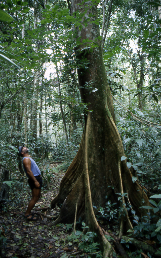 Bicycling Belize-Clearing the forest