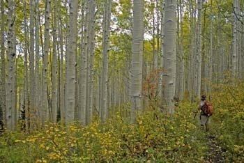Hiking Adventures-Colorado-Crested Butte-Ruby Anthracite Trail