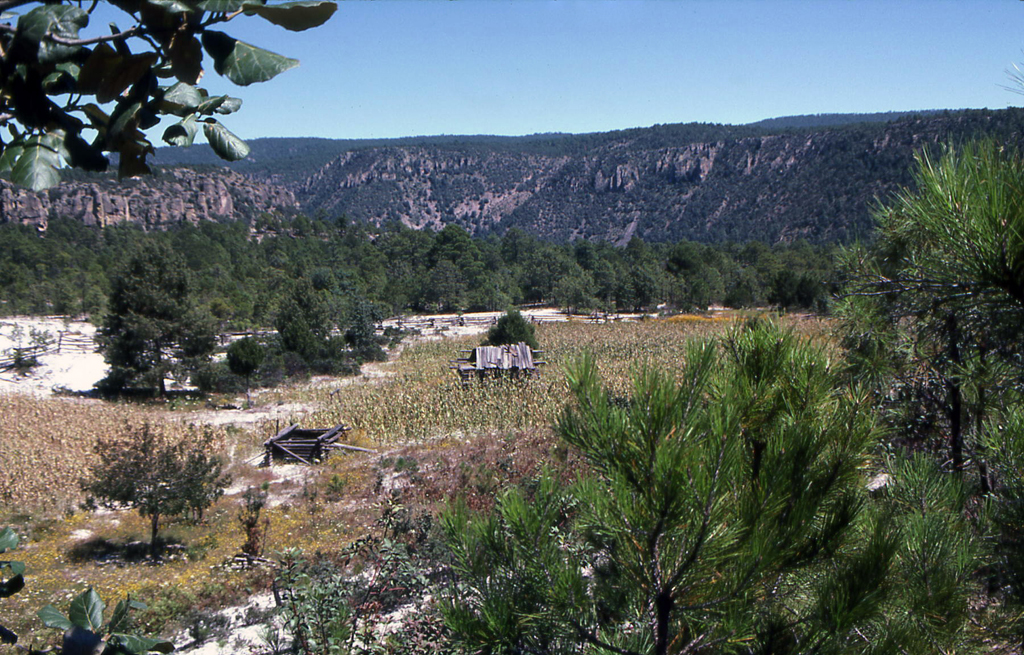 Hiking Copper Canyon-Tarahumara corn field and shelter