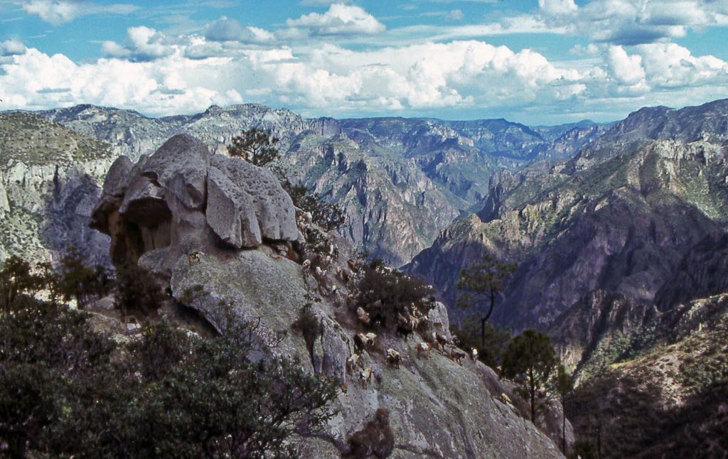 Hiking Copper Canyon-Seeing the goats gave us hope we would reach a ledge with corn fields